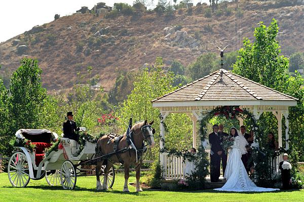 Hazy Meadow  Ranch: Horse  and Carriage  Services